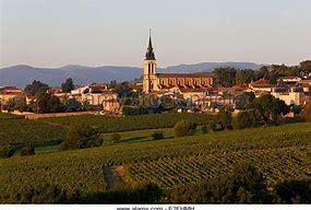 beaujolais vinyard.jpg