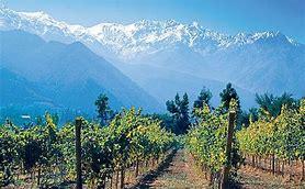 Chilean vinyards.jpg