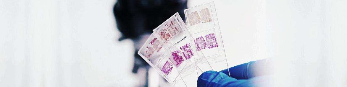 BioMarq-Histopathology.jpg
