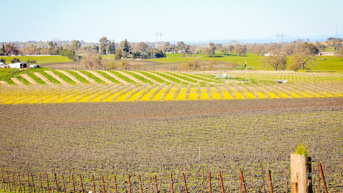 Vaccarezza+Ranch-54_good_earth_farms.jpg