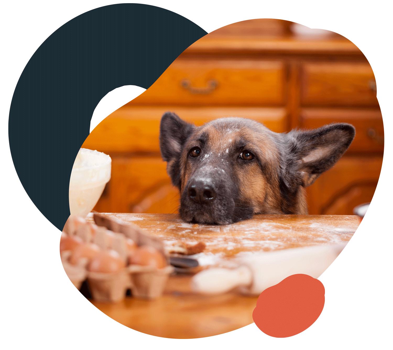 Un manuale di alimentazione e ben 51 Ricette. - Il libro contenuto all'interno della scatola di LezPet non è un libro qualsiasi, ma un volume con un approccio scientifico all'alimentazione casalinga del cane che spiega in maniera chiara come garantirgli una dieta bilanciata, dai primi mesi di vita fino all'età avanzata, come preparare gli alimenti, cosa evitare e cosa preferire.