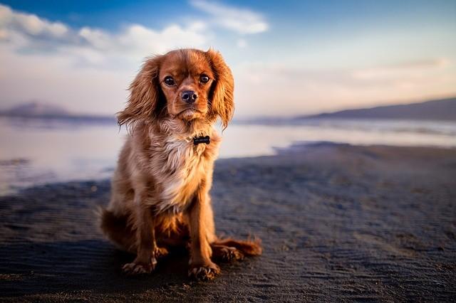 Ricordi delle vacanze. E anche un pò di nostalgia 😘 -- #instadaily #dogoftheday #doglife #puppypalace #dogs #doglover #pets #dogsofinstagram #cane #doglovers #doggy #doggie #ilovemydog #pup #dogs_of_instagram #puppygram #doggies #lezpet #dogstagram #dogscorner #instagramdogs #instapuppy #pet #doglove #puppy #dogslife #dog