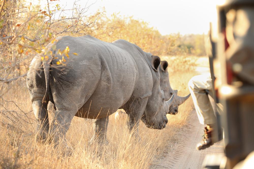heritage explorist portfolio - South Africa