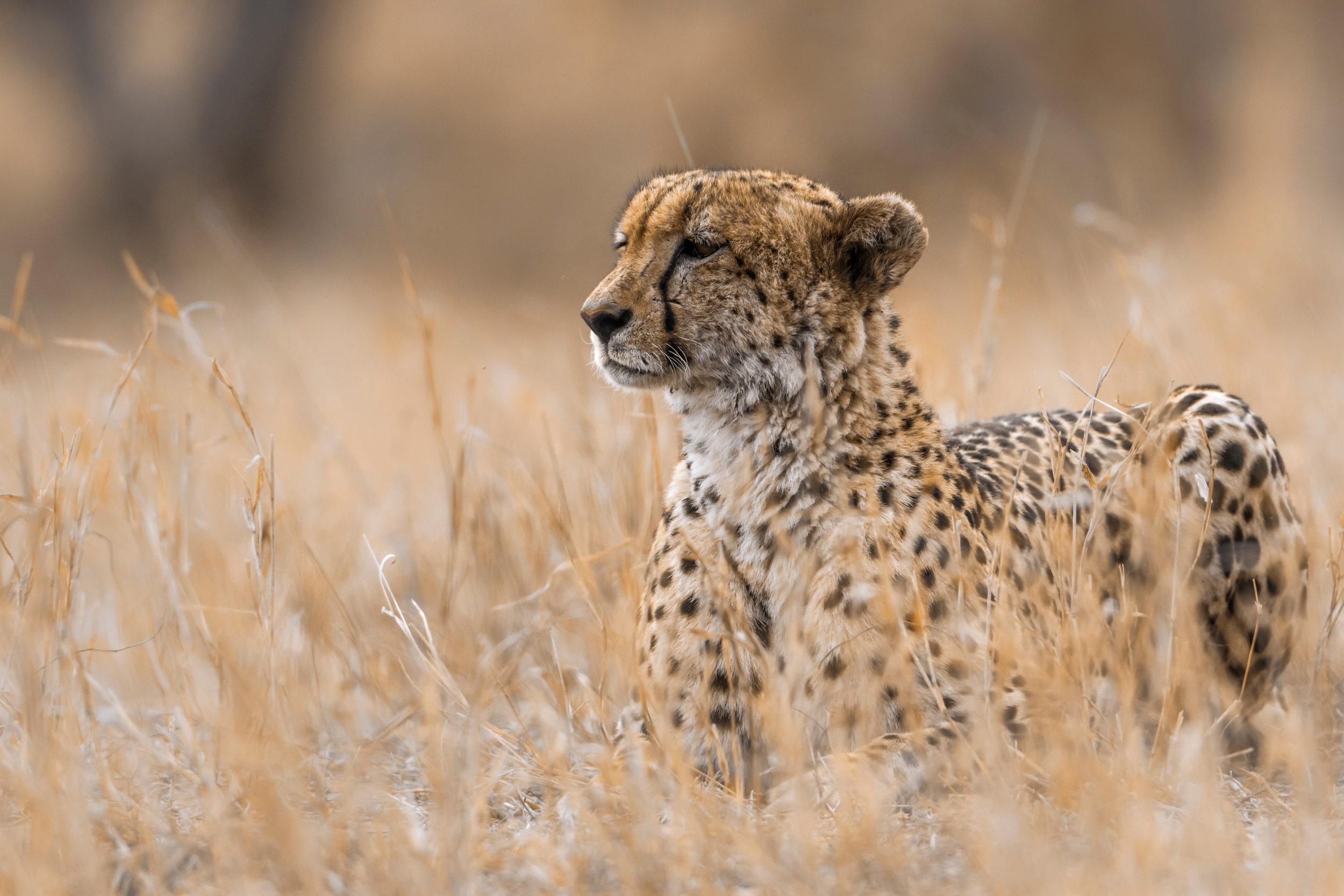 heritage explorist portfolio - kenya