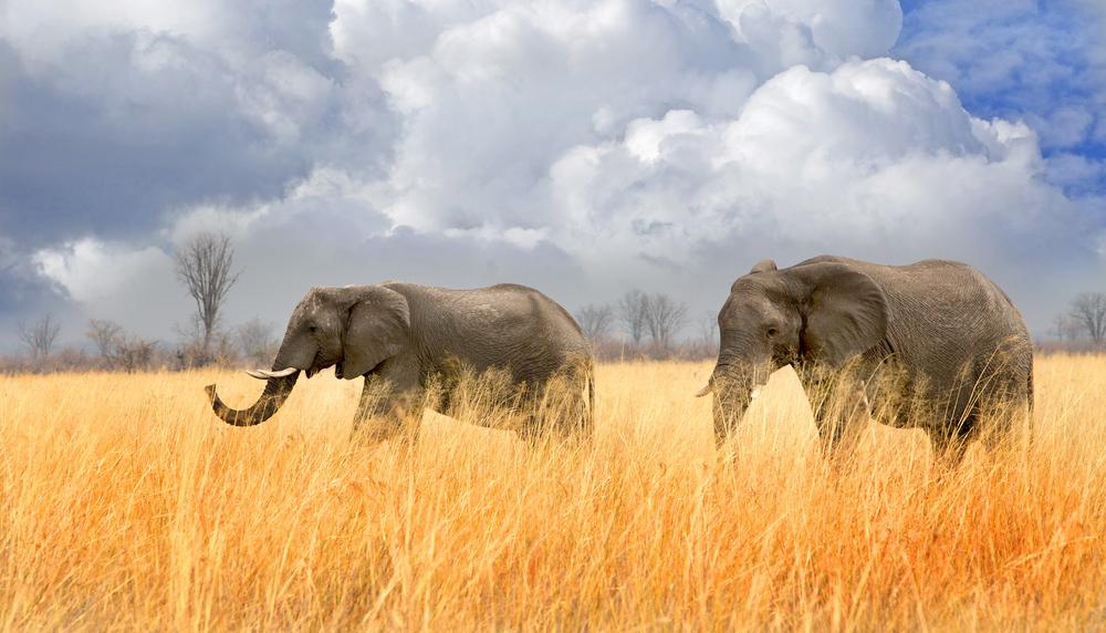 heritage explorist portfolio - zimbabwe