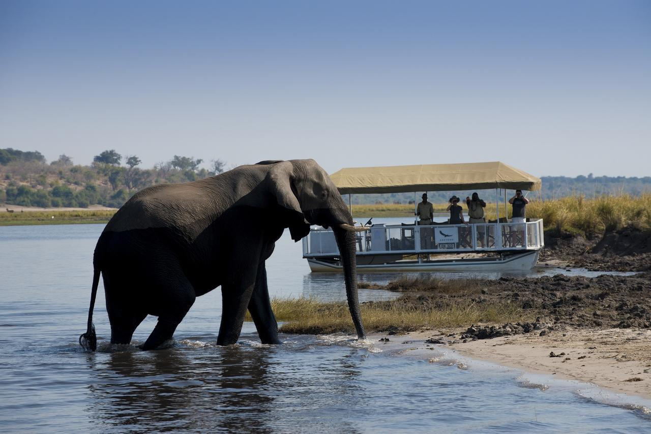 expeditions_chobe_185_private_boat_cruises_on_the_chobe_river2.jpg