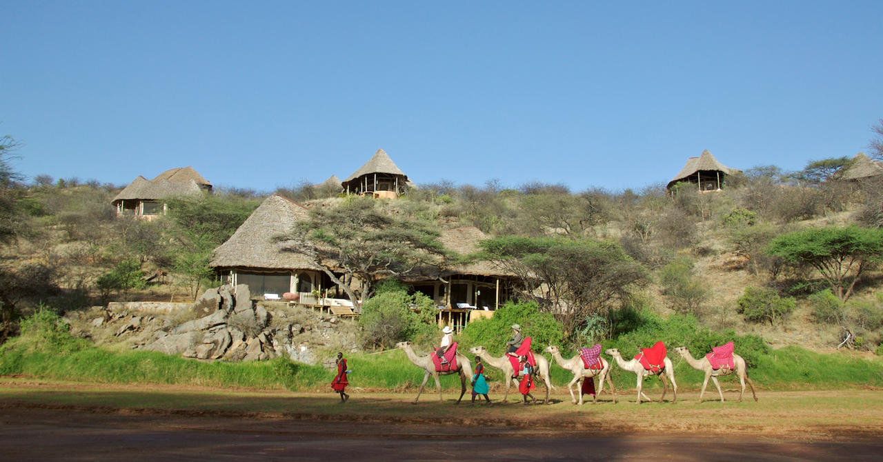 SASAAB - Camels infront of the lodge.jpg