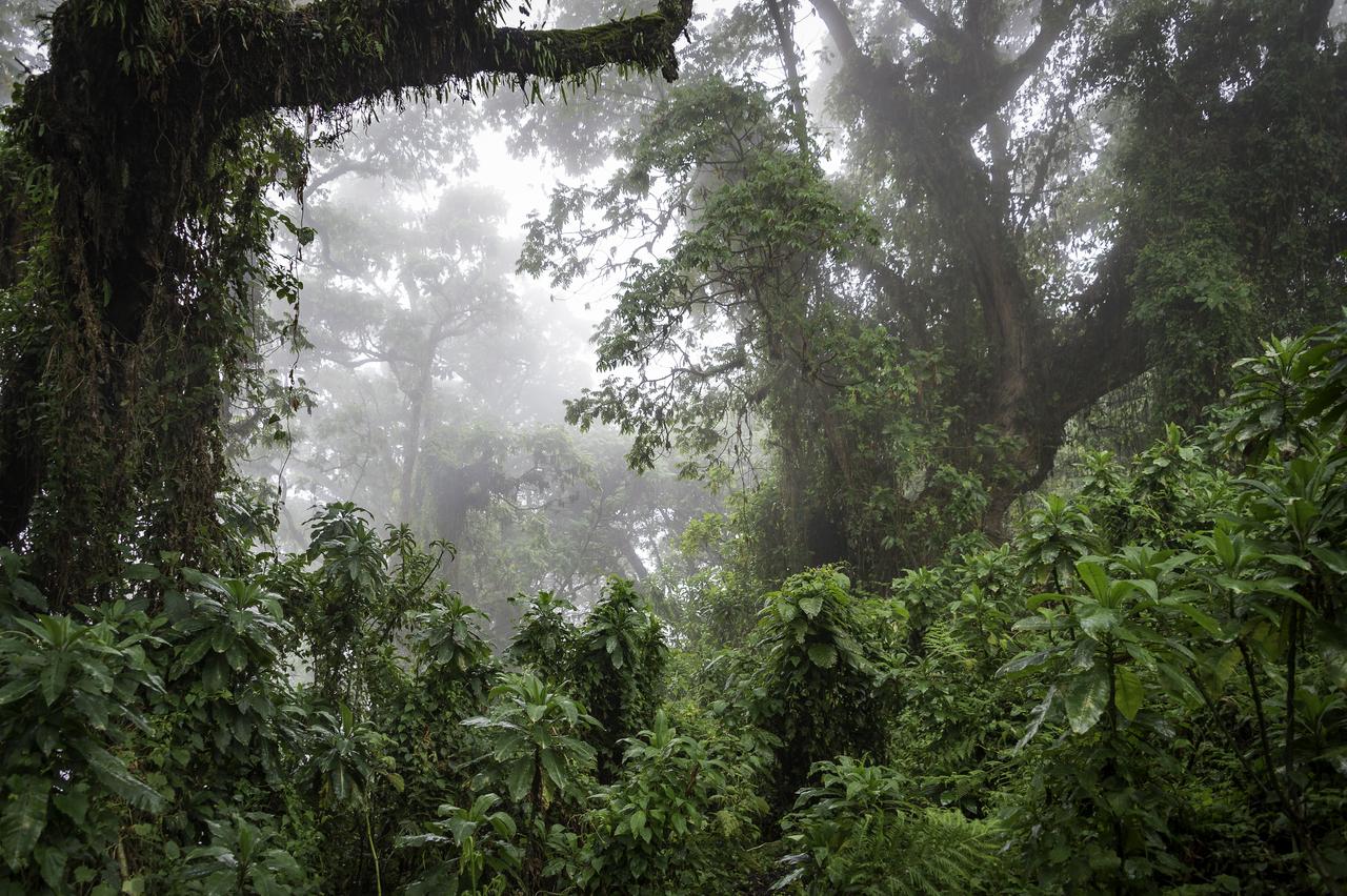 Rwanda-349.jpg