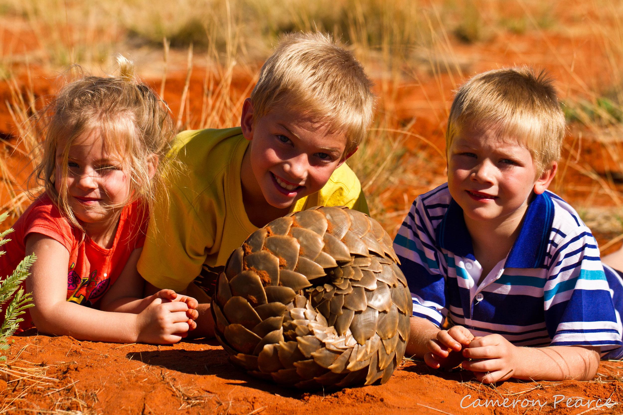Pangolin  Kids Tswalu.jpg