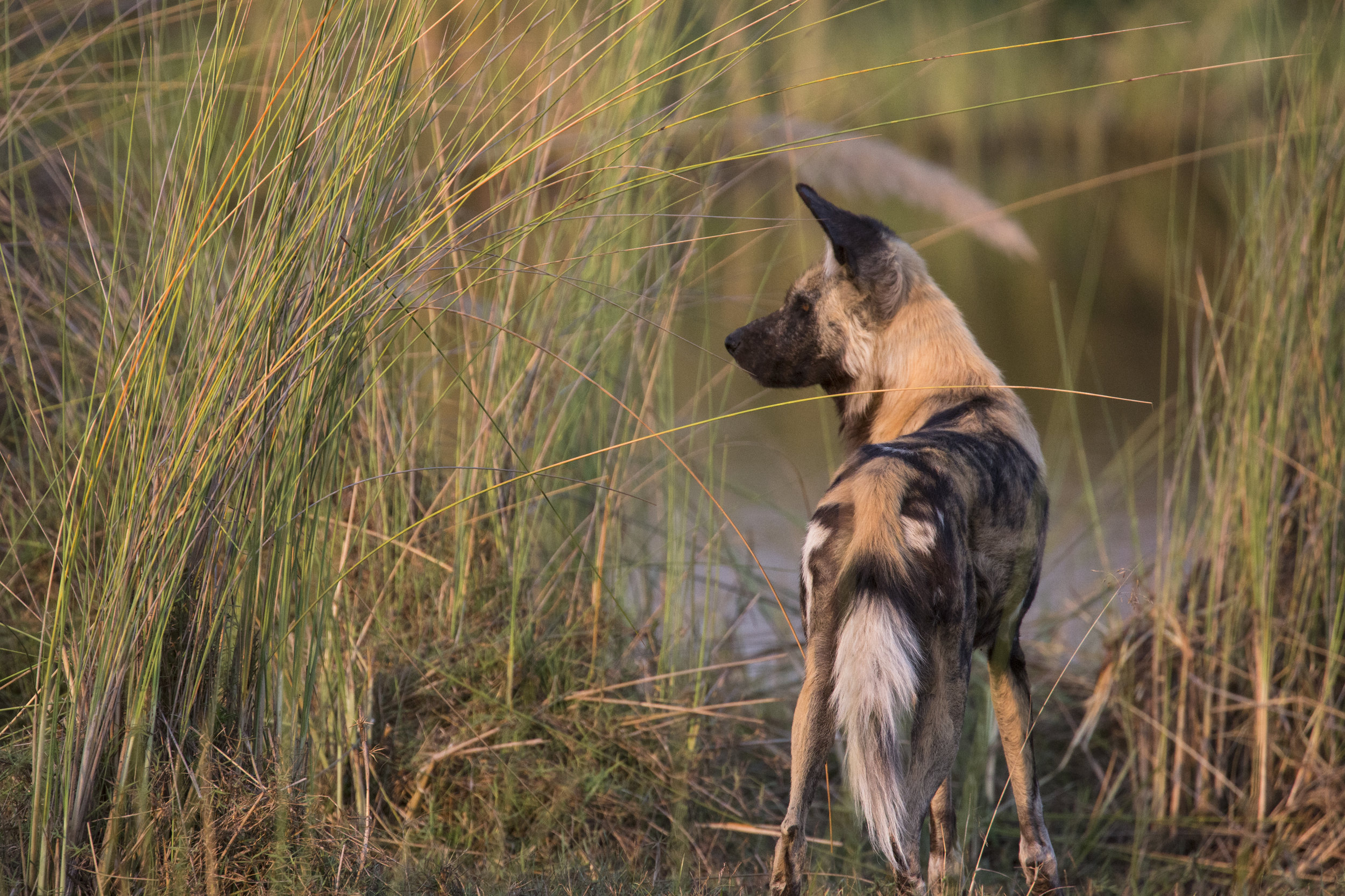 dubaexplorerscamp_wild_dogwater_vanessastephens.jpg