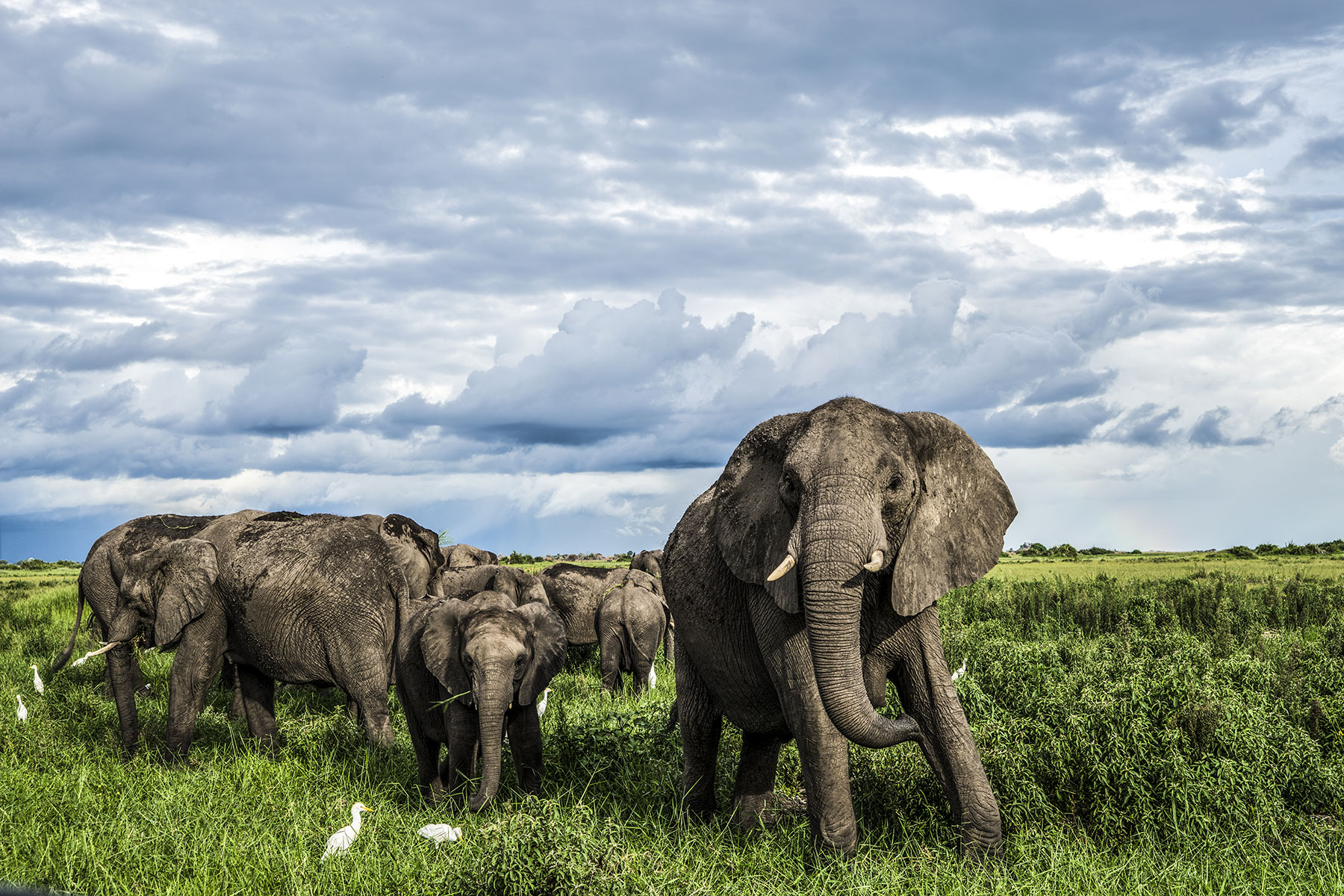 dubaexplorers-elephantherd.jpg