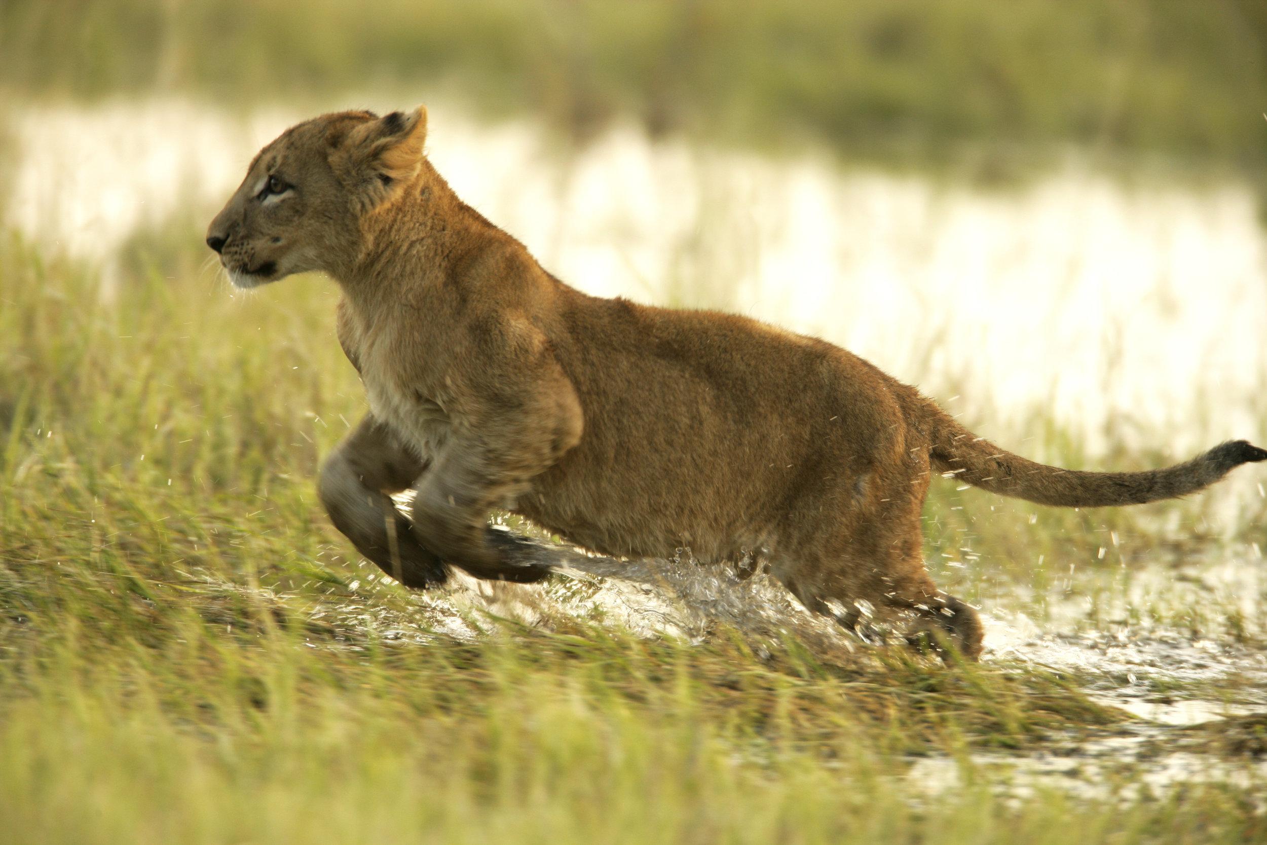 _copyright_beverly_joubert_duba_wildlife_botswana_3998.jpg