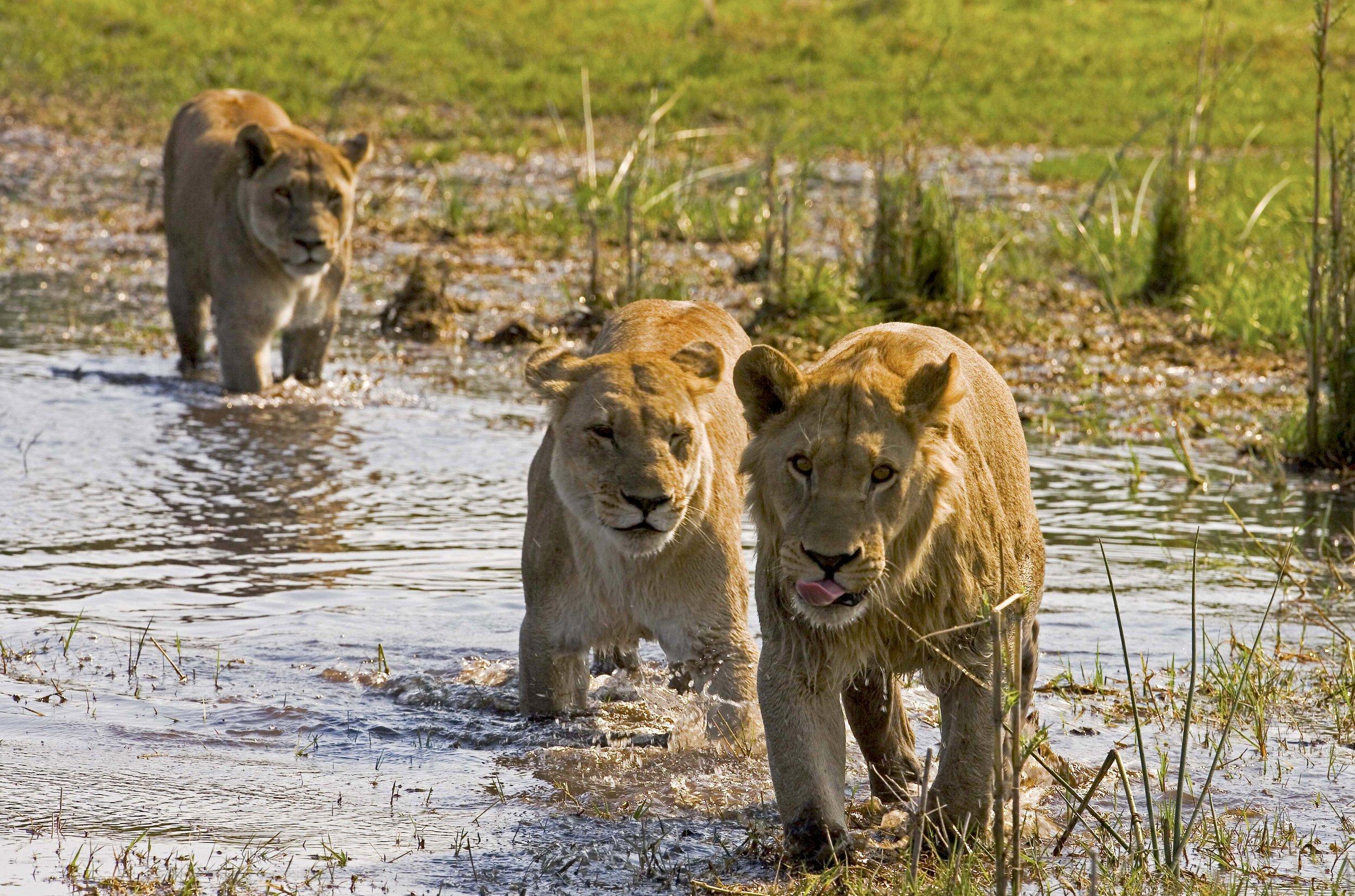selindaadventuretrail-wildlife-greatplainsconservation-16.jpg
