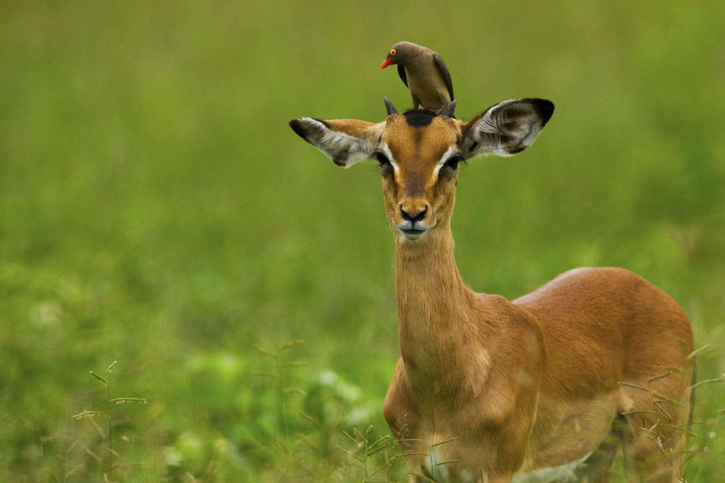 selindacamp-wildlife-greatplainsconservation-46.jpg