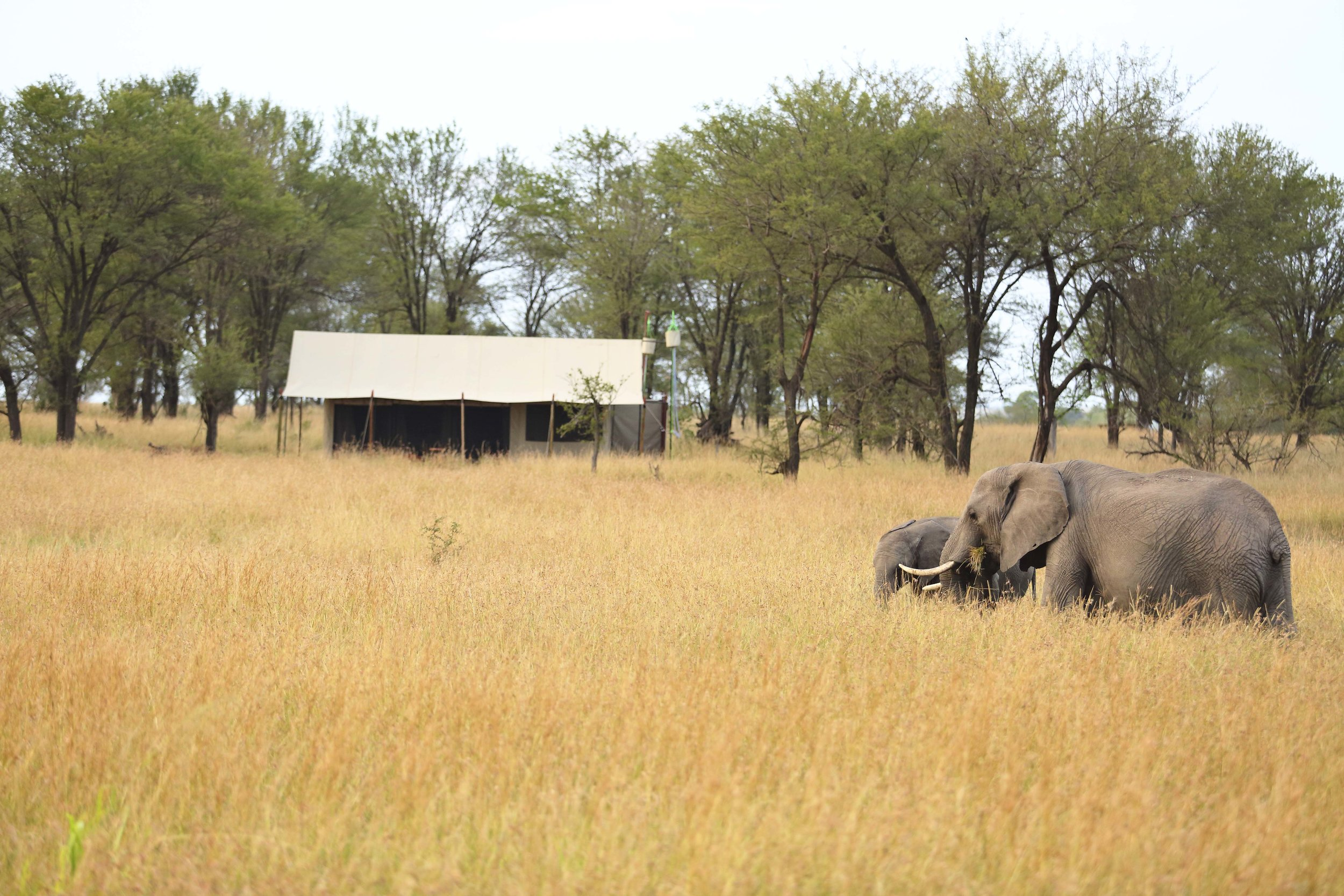 kimondo-camp-elephant-in-camp.jpg