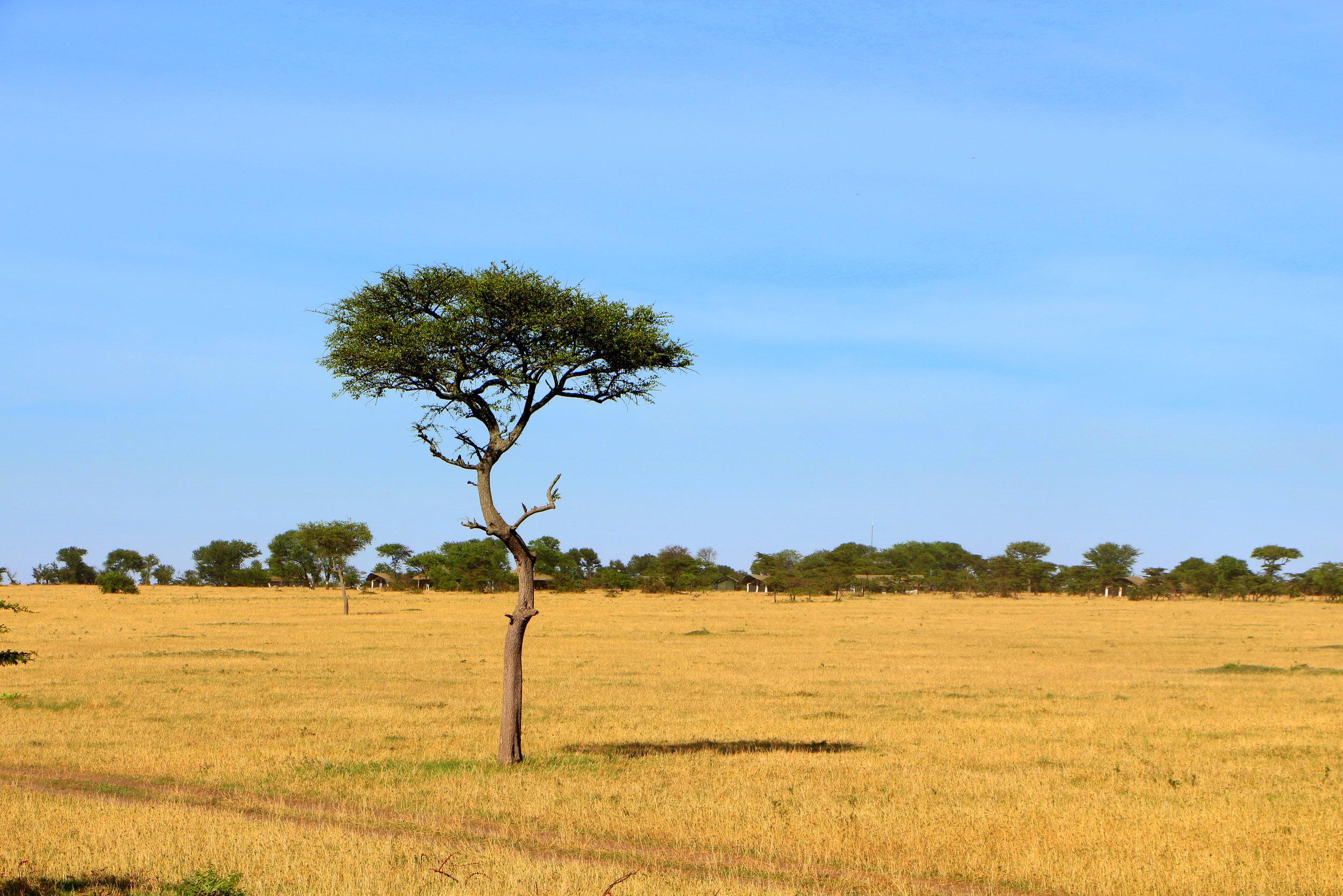 Kimondo-Northern-Serengeti-Quinton-Miller.JPG