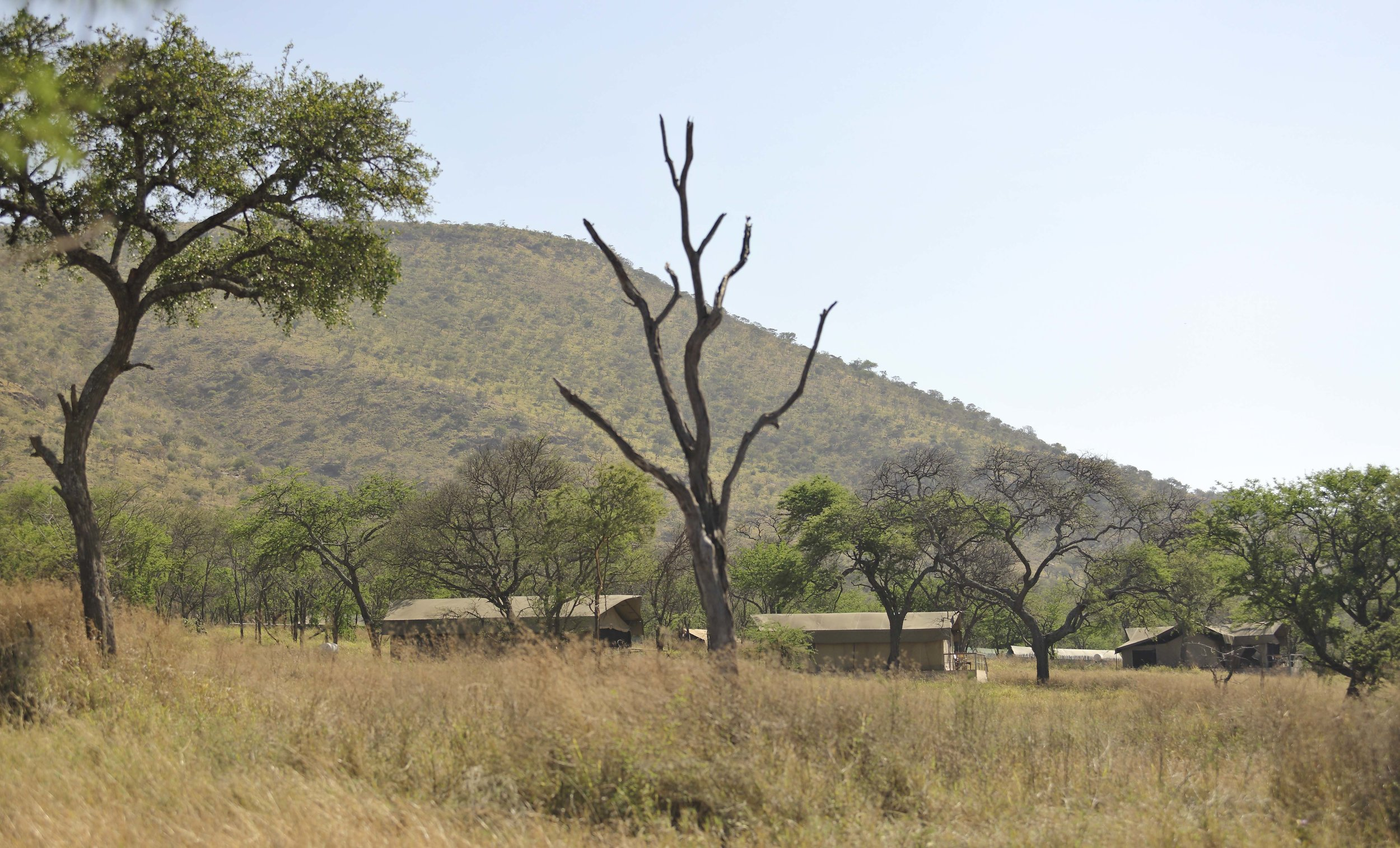 Dunia-Camp-in-central-Serengeti.jpg
