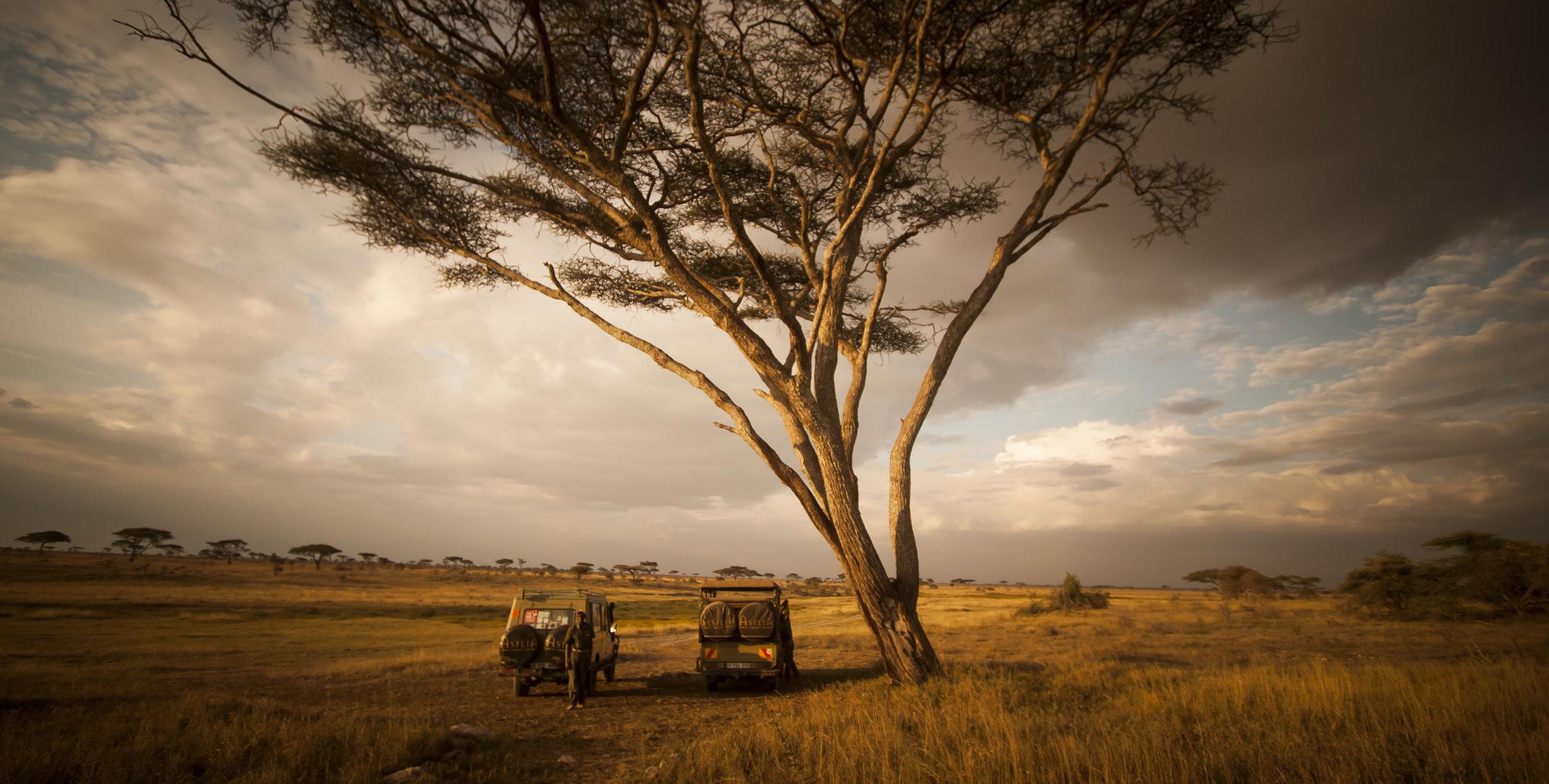 Game-Drive-Vehicles-Serengeti-Eric-Frank-MR.jpg