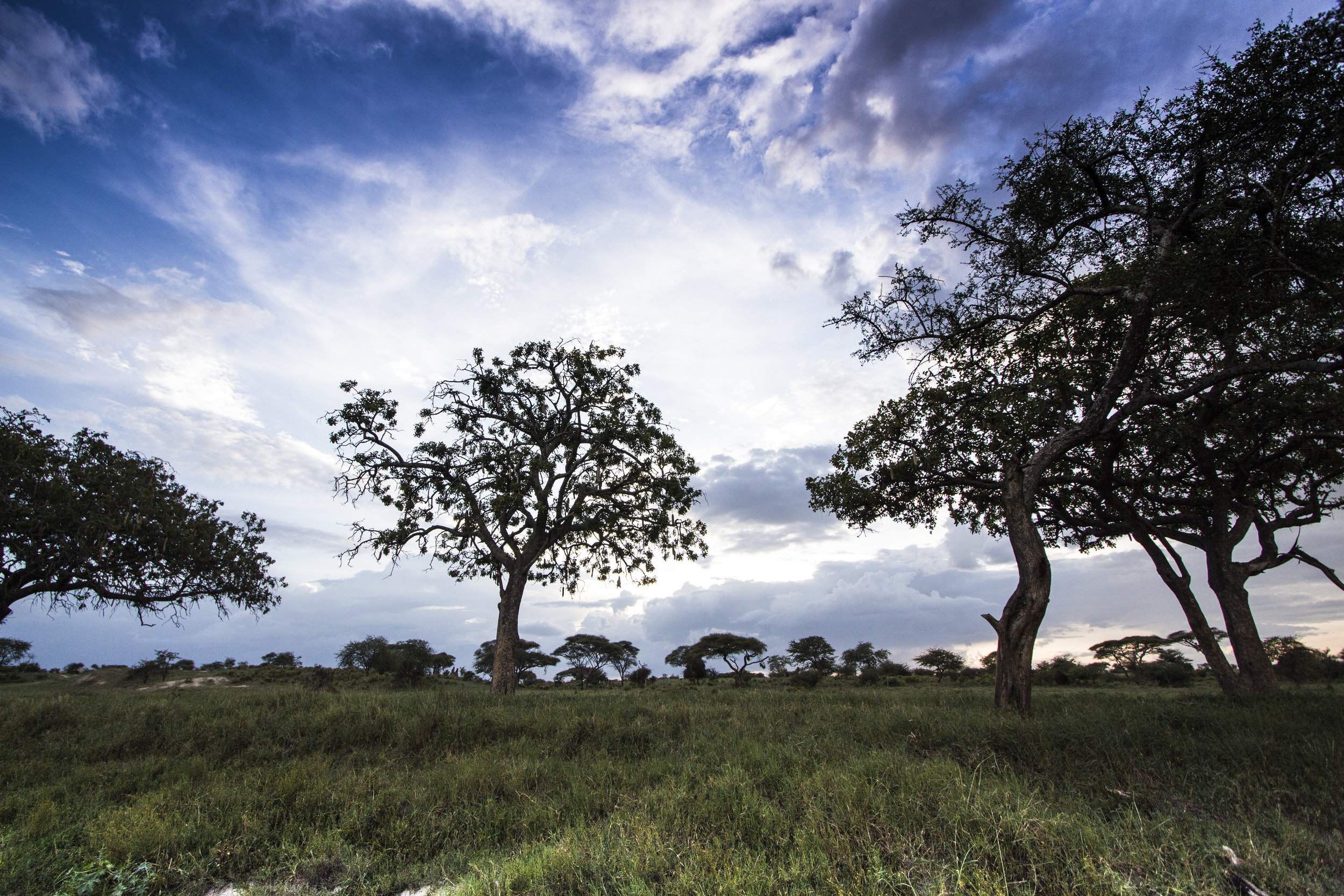 Tarangire-National-Park-landscape-Tracey-Van-Wijk-HR.jpg