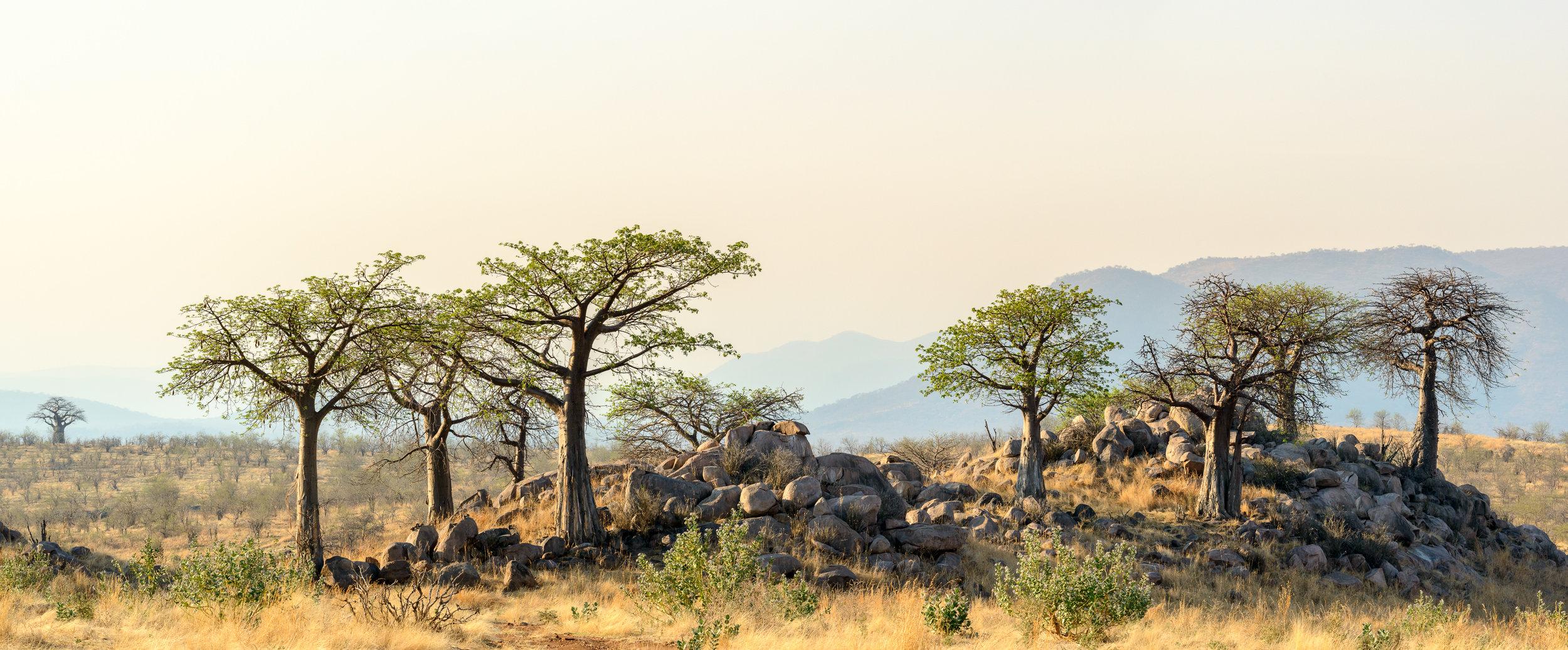 Jabali-Ridge-landscape-kopjes.jpg