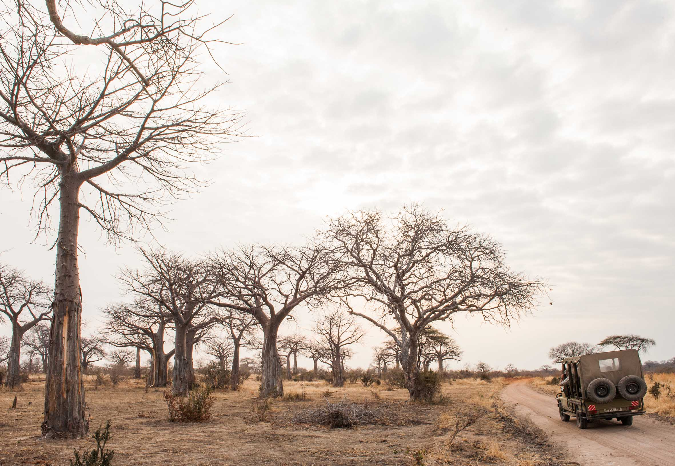 Kwihala-Camp-Game-Drive-Views-Baobab-Paul-Joynson-Hicks-LR.jpg