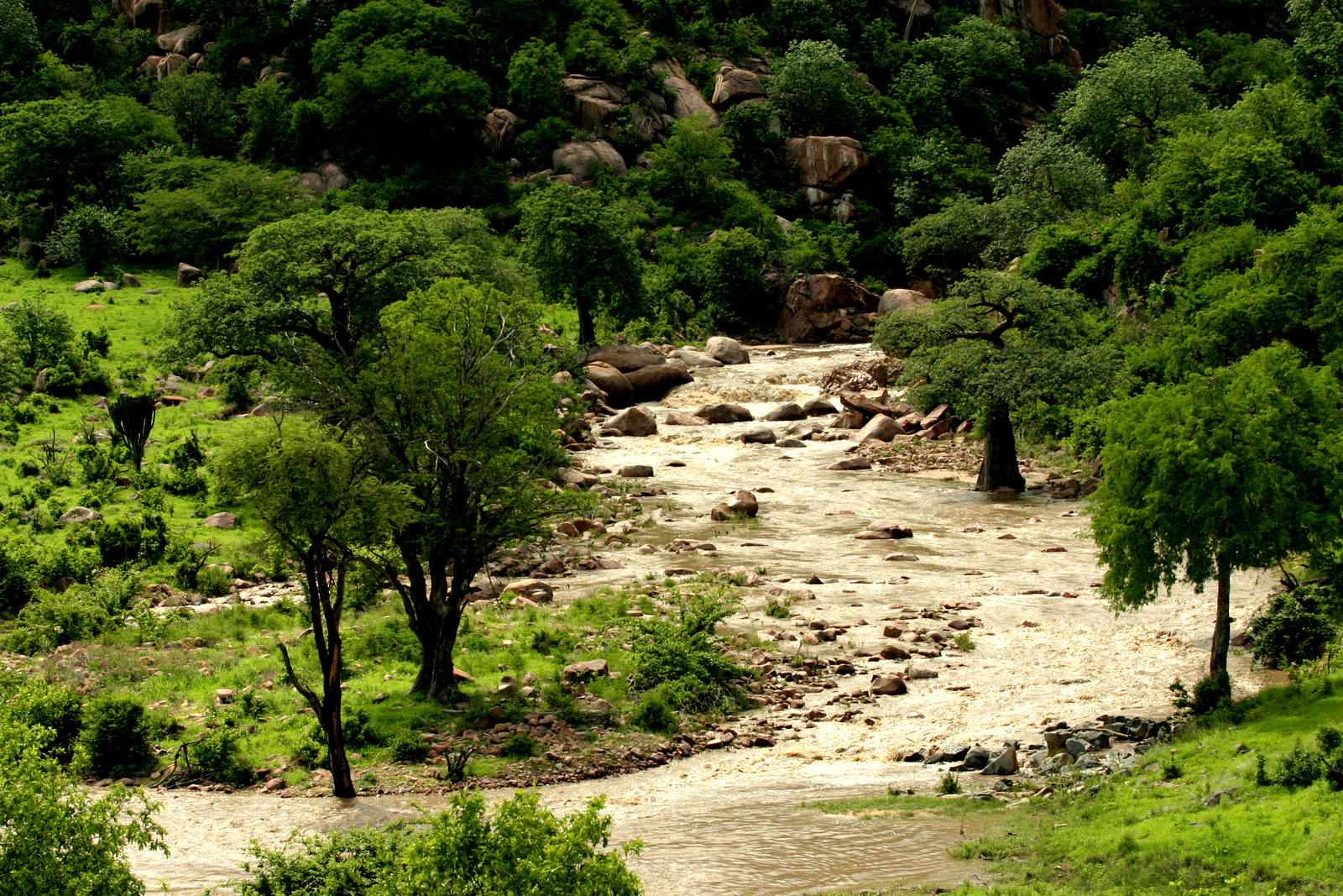 Ruaha-National-Park-River-Kwihala-Camp-MR-(1).jpg