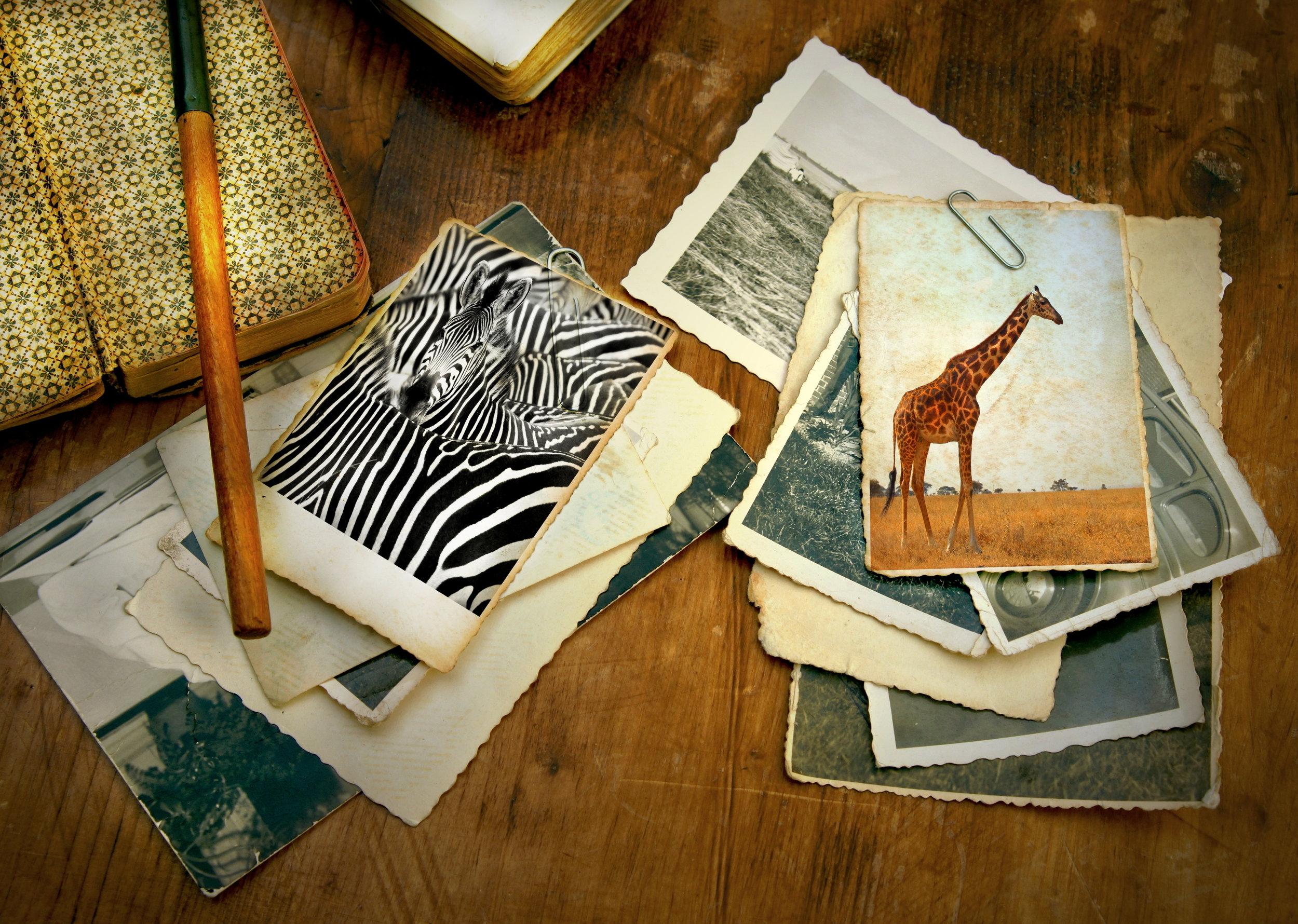 begin your safari plan now - craft your kenya safari
