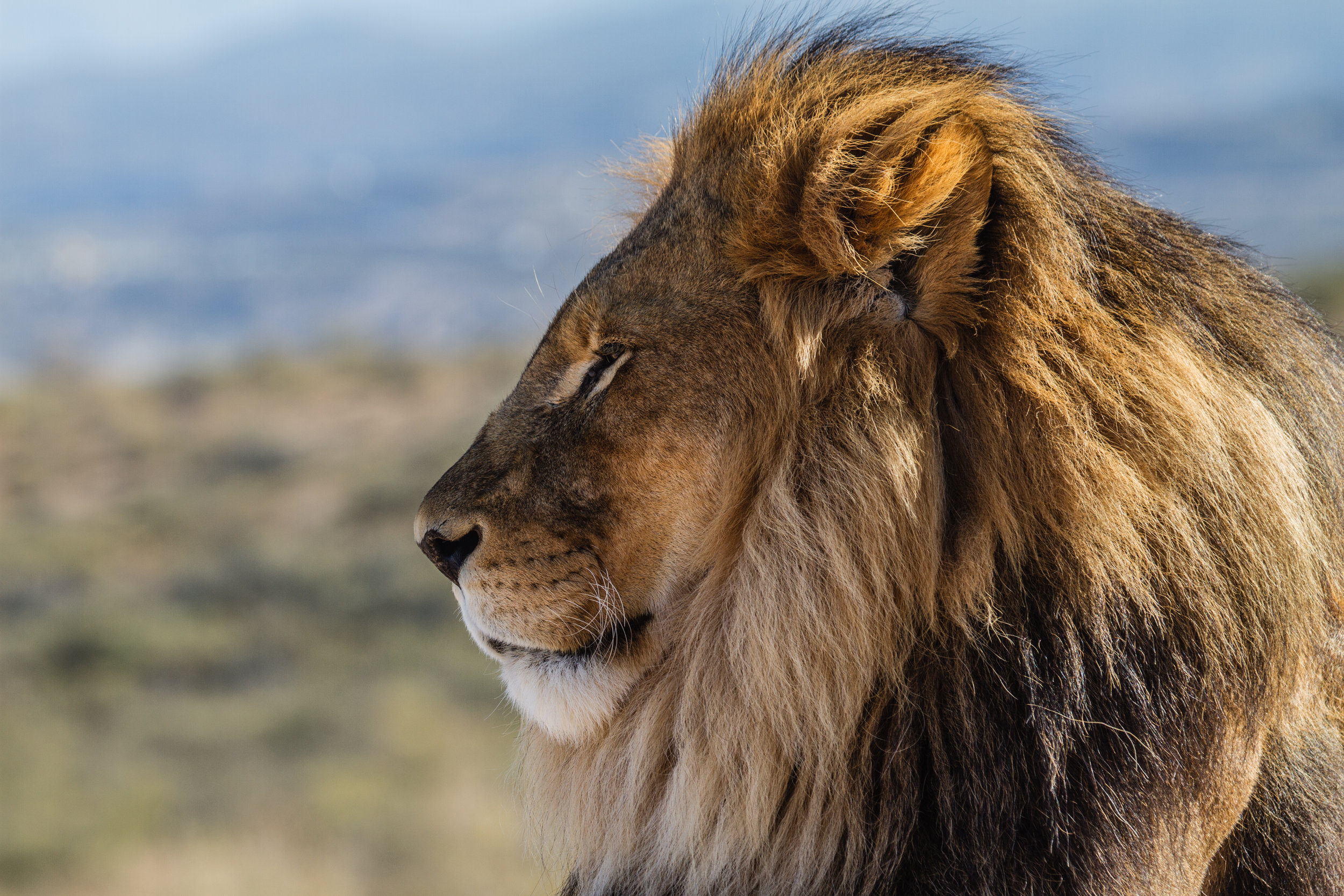 serengeti safaris - best luxury safaris