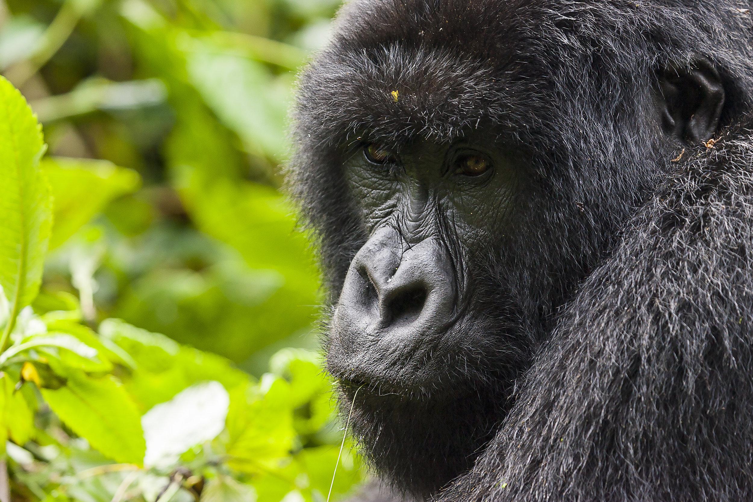 top safari programs - rwanda