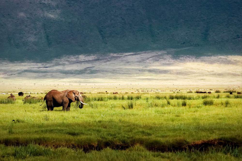 tanzania - ngorongoro crater