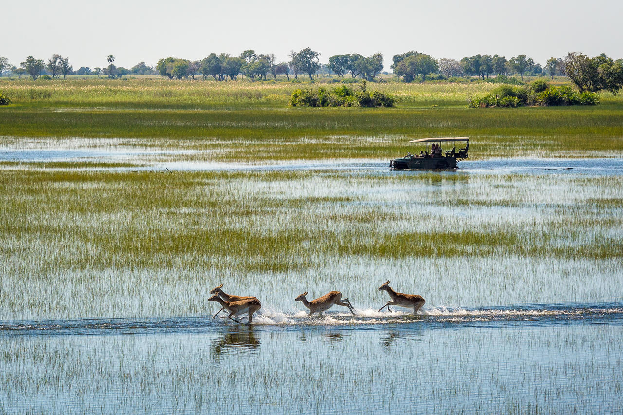 top botswana destinations - the okavango