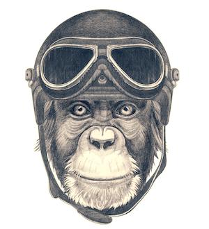 adventure exp chimp.png