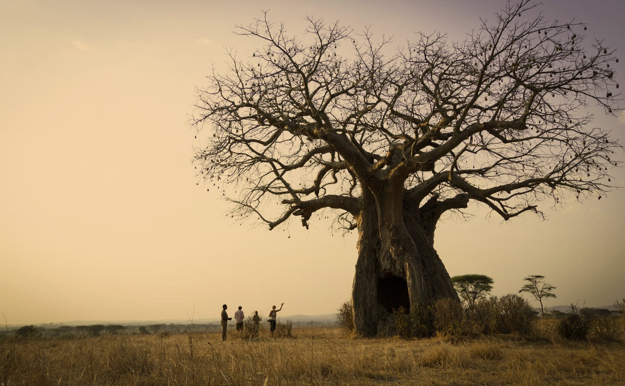 tanzania's top destinations - ruaha national park