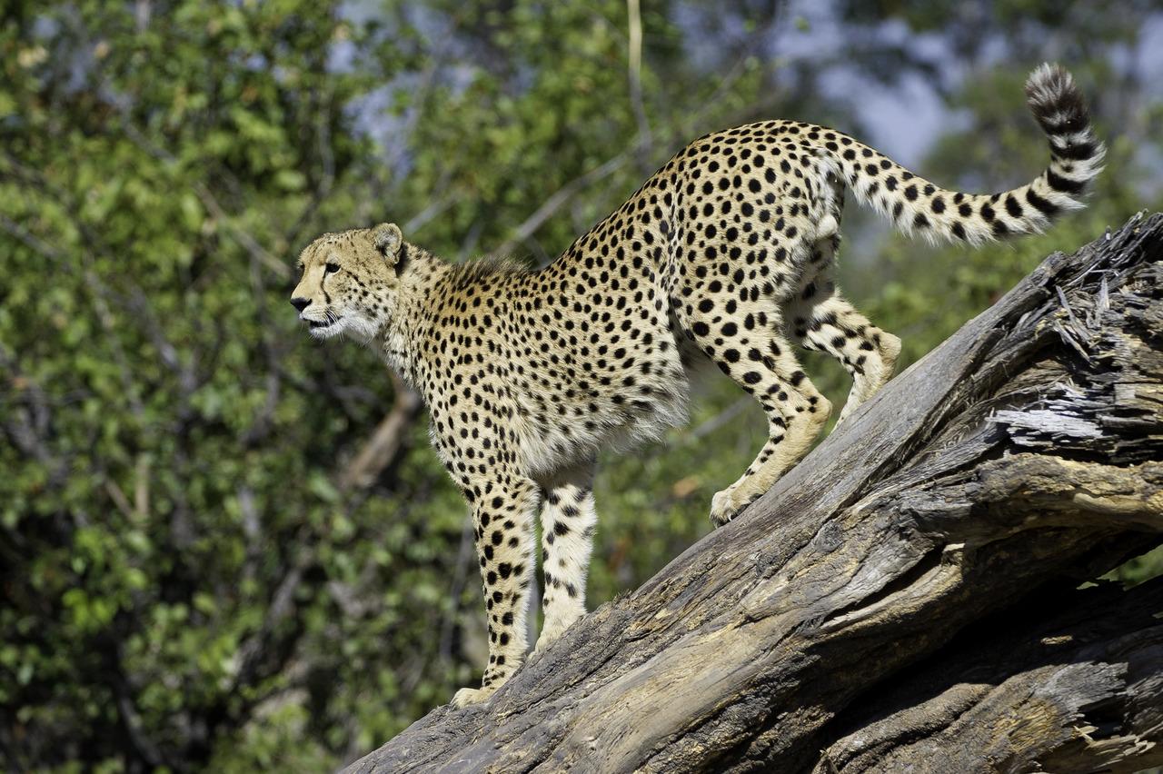 top rated kruger safaris - classic