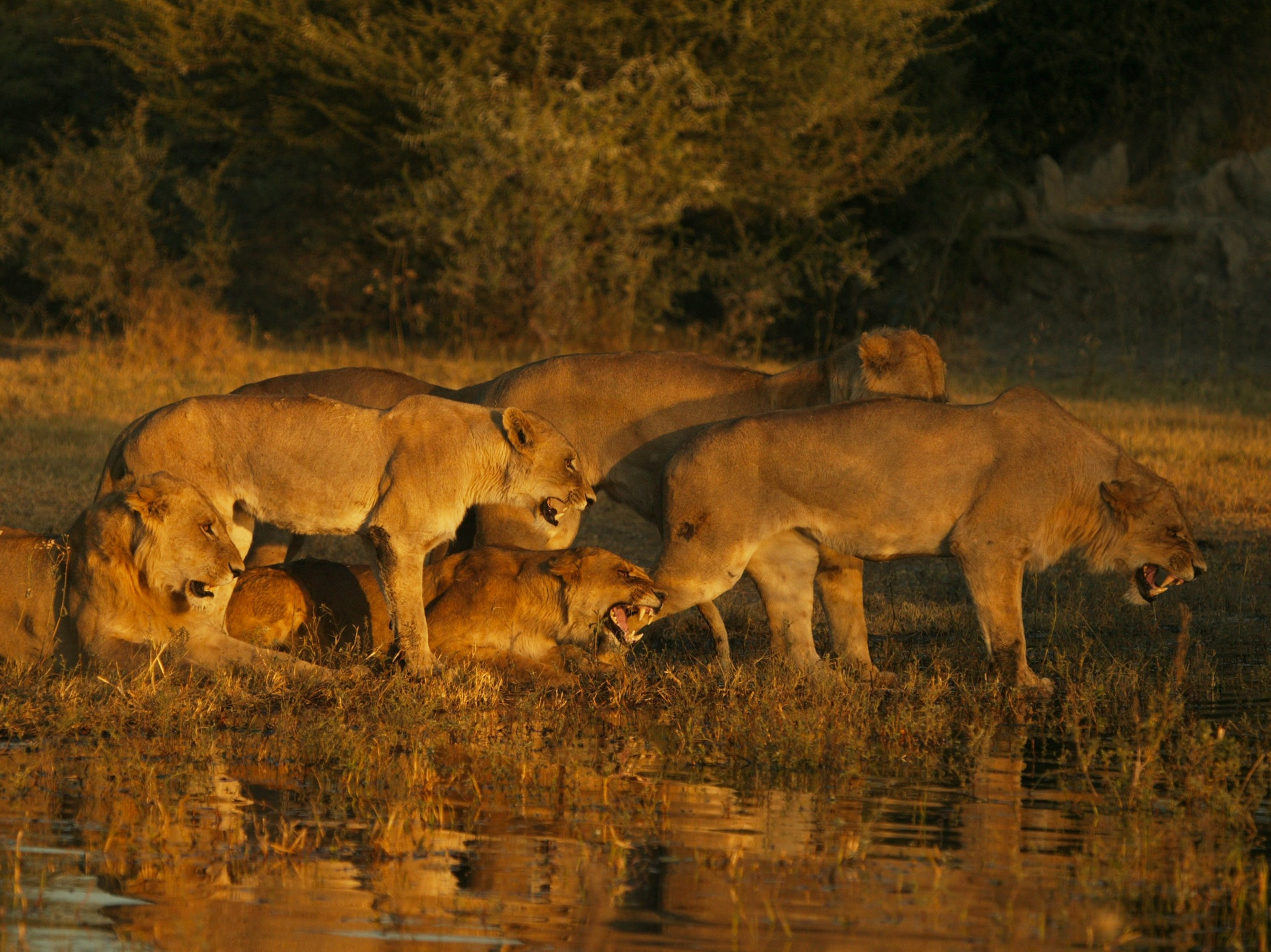 botswana+safari