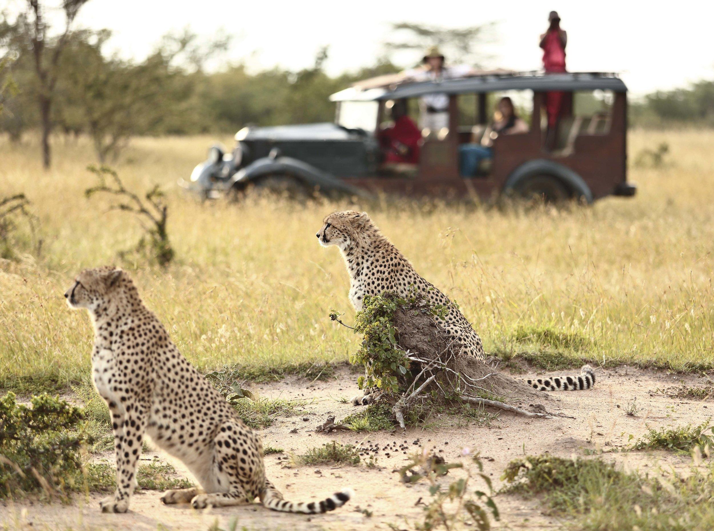 top kenya dsestinations - masai mara