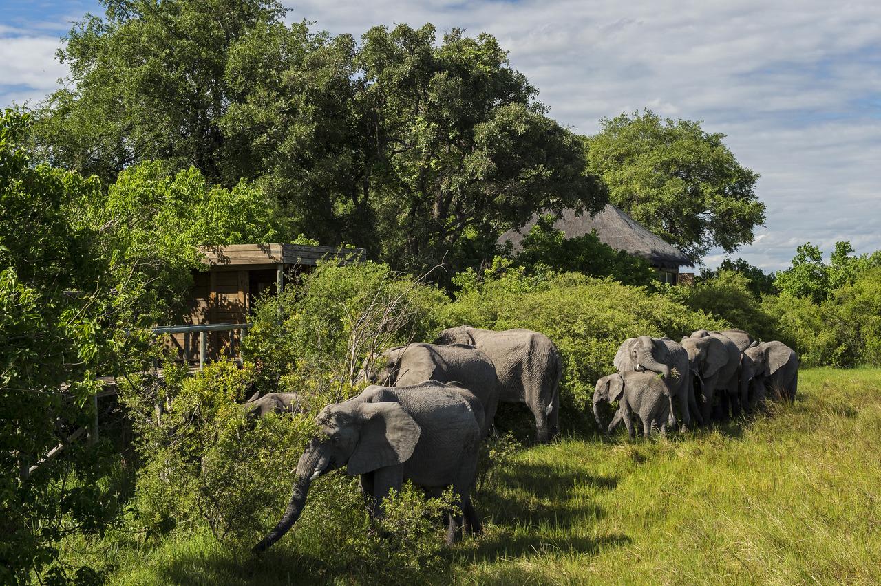 top rated kruger safaris - livingstone luxury