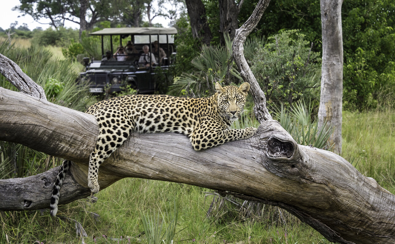 featured lodge - phinda and beyond - other private reserves