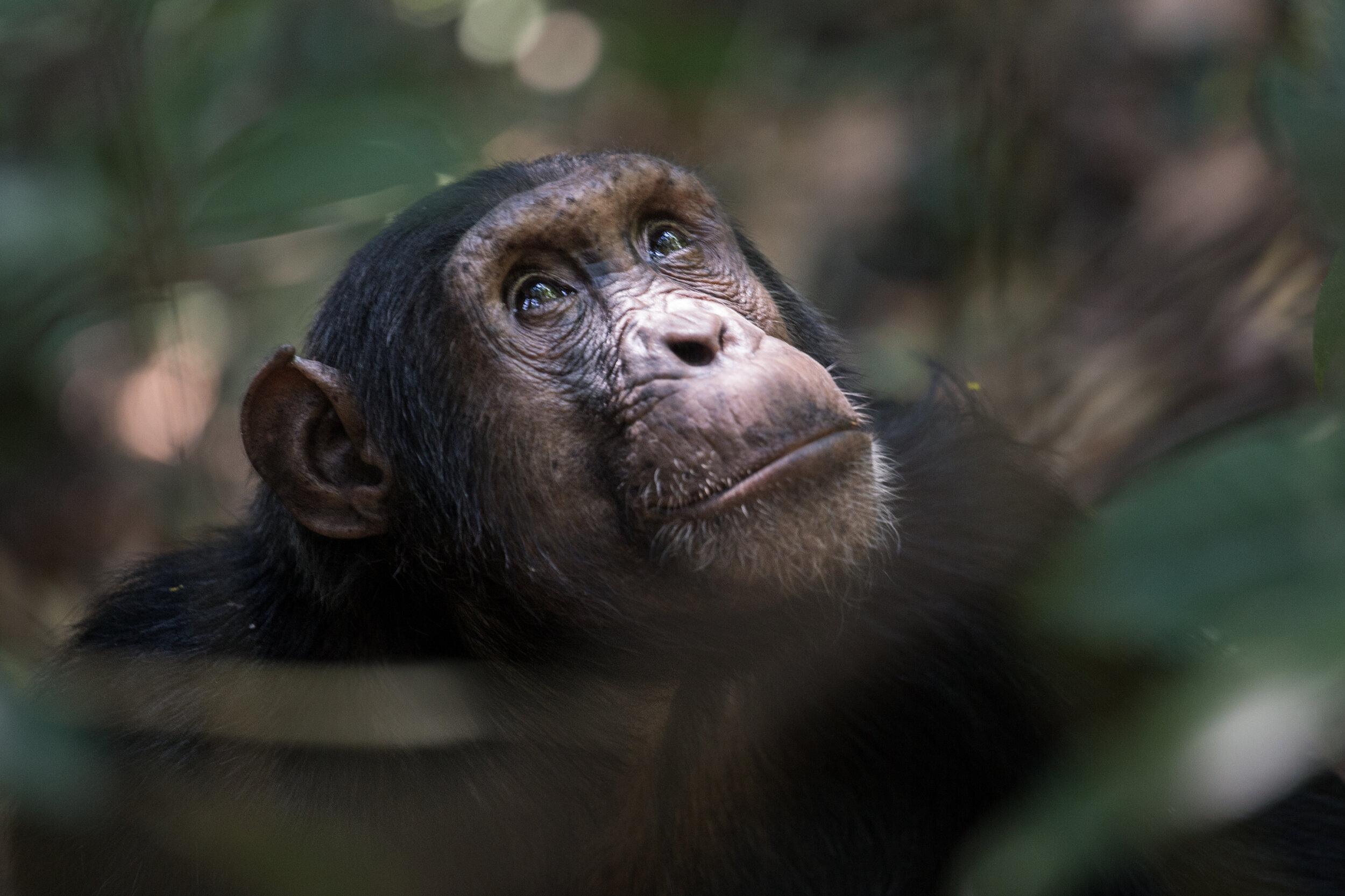 mahale national park - tanzania - greystoke mahale