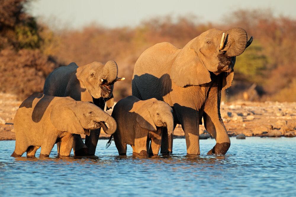 top namibia destinations - etosha national park
