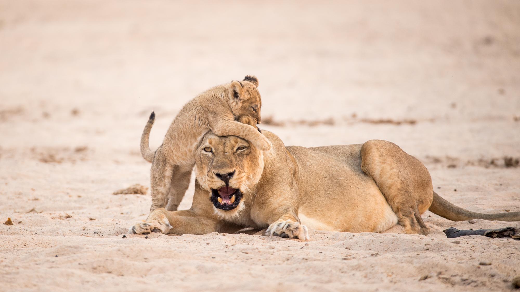 chikwenya_wildlife_2000px_-_kyle_and_ruth_263_of_334.jpg