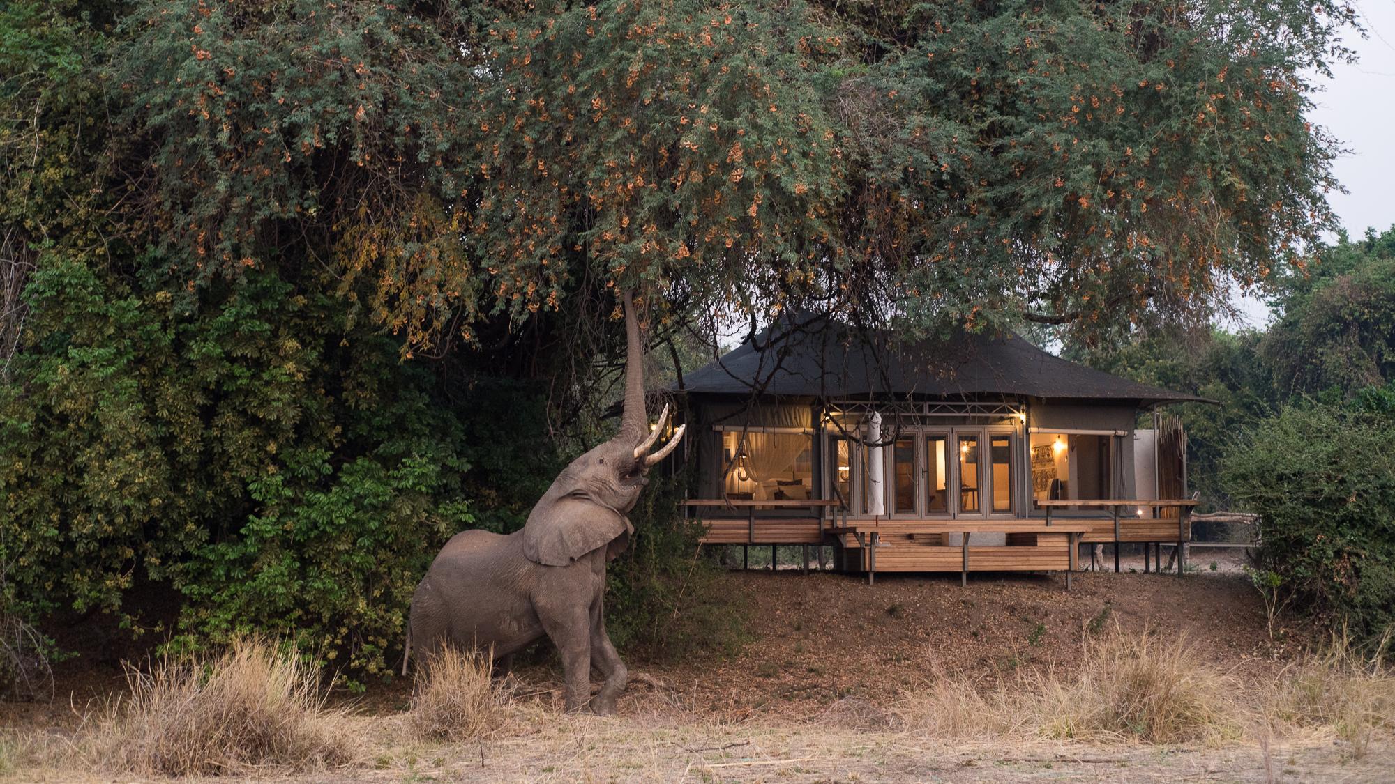 chikwenya_wildlife_2000px_-_kyle_and_ruth_234_of_334.jpg