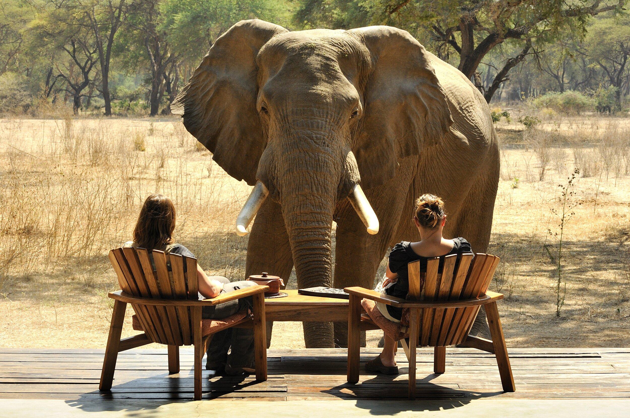 africa's top destinations - zambia