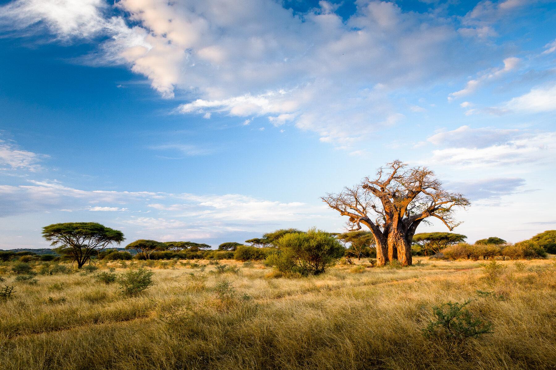 top zimbabwe destinations - malilangwe