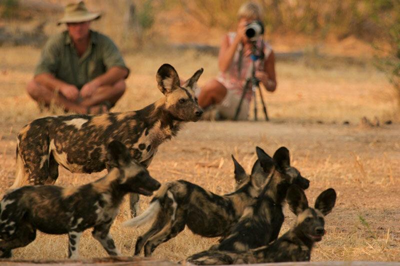 our top zimbabwe safaris - classic