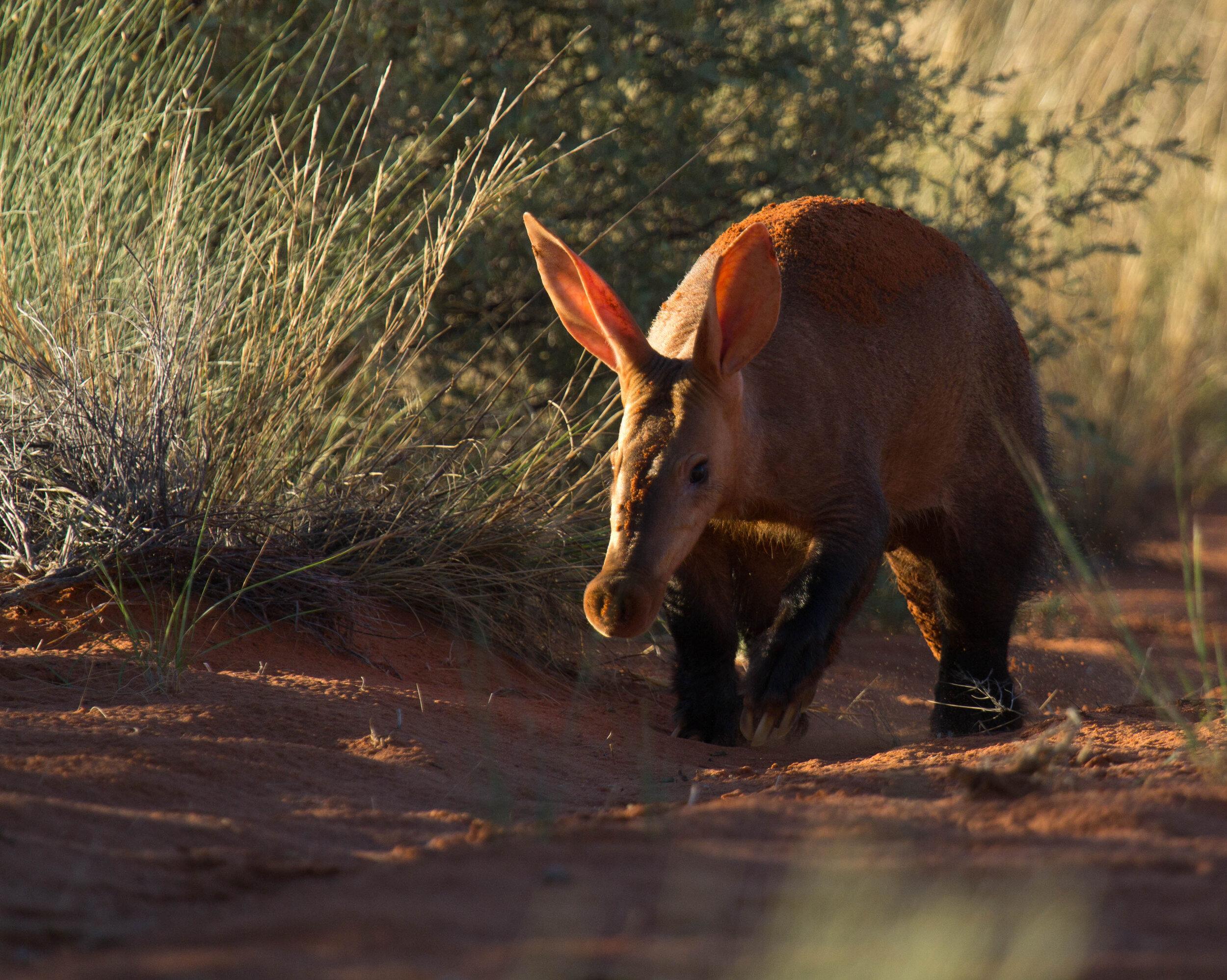 Tswalu's unique wildlife encounters