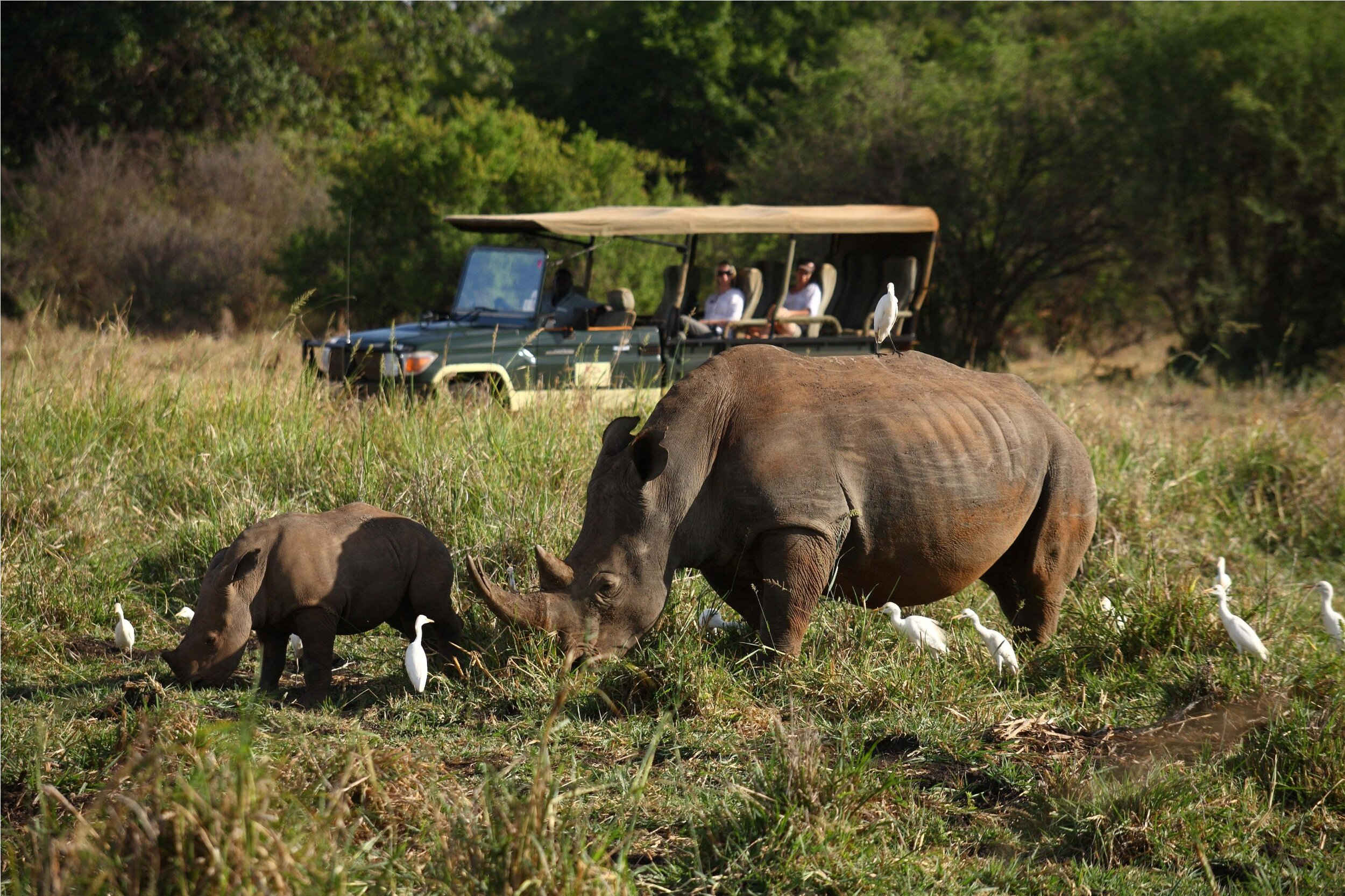 Rhino viewing with local guides
