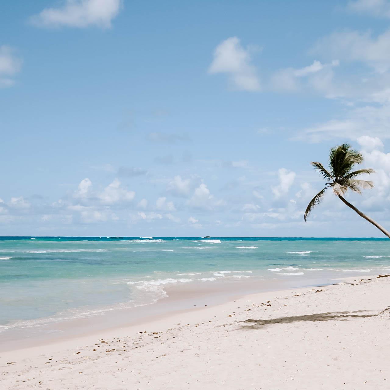 Palm Tree_.jpg