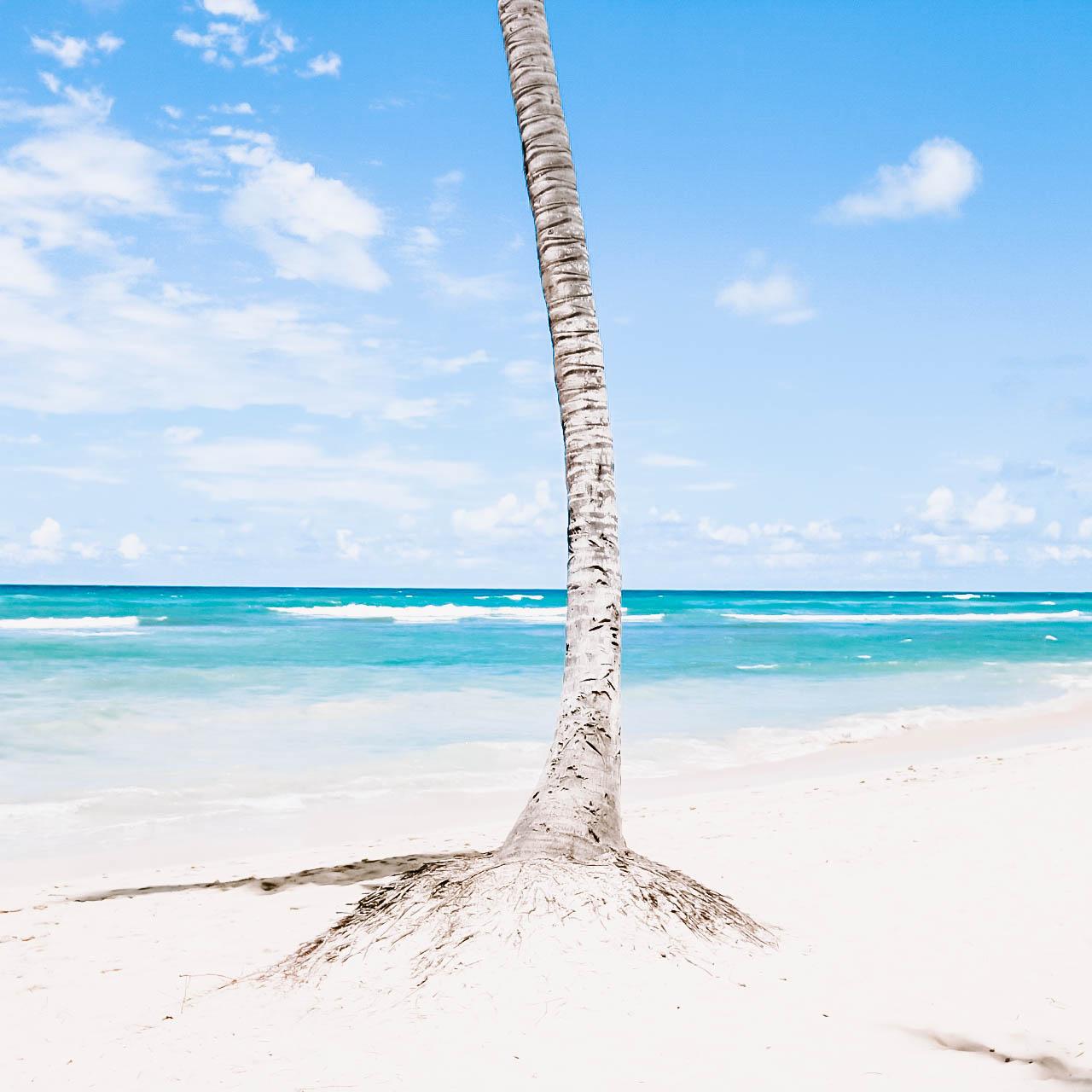 Palm Tree Base.jpg
