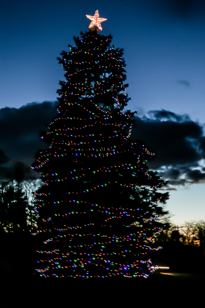 Official Southampton Village Christmas Tree